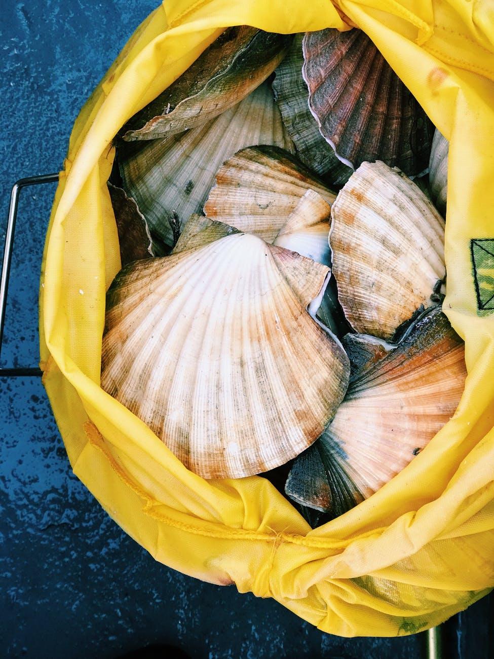seashells in a bag